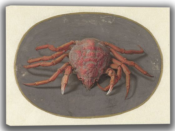 Goes, Jan Augustin van der: Crab. Fine Art Canvas. Sizes: A4/A3/A2/A1 (004066)